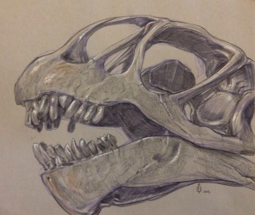 sketch-baby-brachiosaurus-skull-nyc