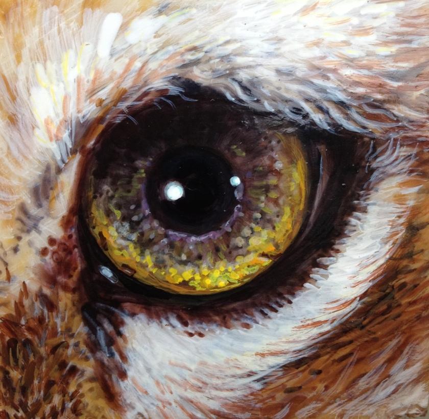 Tigerseye_study